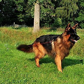 Piquet d'amarrage au sol en spirale avec laisse pour chien de 4m