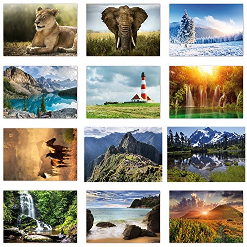 12 Stück Postkarten MIX - Set aus verschiedenen Motiven mit Natur und Tieren, siehe Abbildung - Format: DIN A6 ( PKT-004 ) (Postkarte Natur)