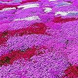 Nuovo impianto di arrivo semi Phlox Four Seasons semina di piante Bonsai in vaso per la casa giardino 100 semi / pacchetto fai da te