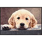 Salonloewe Nosy Dog Fußmatte 50 x 75 cm SLD1863-050x075 Türmatte, Schmutzfangmatte, Hundefussmatte, Fußmatte Hundemotiv