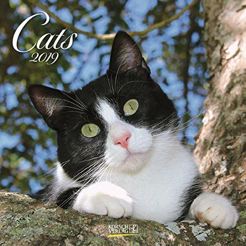 Cats 2019. Broschürenkalender: Broschürenkalender mit Ferienterminen