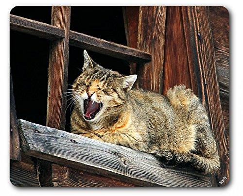 1art1 93923 Katzen - Siesta, Bitte Nicht Stören Mauspad 23 x 19 cm -