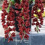 Semi 150PCS Ranunculus asiaticus fiori per la casa e le piante di giardino fai da te persiano Buttercup seme di fiore Bulbi