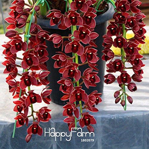 Galleria fotografica Semi 150PCS Ranunculus asiaticus fiori per la casa e le piante di giardino fai da te persiano Buttercup seme di fiore Bulbi