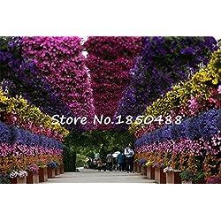 200 Hanging Petunie Samen, Topf Balkon Kriechgang Petunie Blumensamen, Blumentöpfe Pflanzgarten Hinter, 200 Teilchen