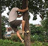 RENHAN Antiscivolo Strumento per Arrampicarsi sugli Alberi, Professionali Tree Climbing...