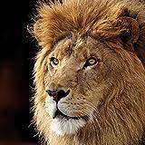 Sony Playstation 3 Folie Skin Sticker aus Vinyl-Folie Aufkleber Lion King Löwe Raubkatze