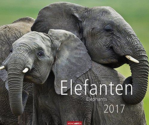 Elefanten 2017