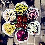 ¡Gran venta! 50 piezas de flor de la margarita Semillas Semillas de helado de perfume en maceta flor del crisantemo Inicio la decoración del jardín de flores Bonsai 20