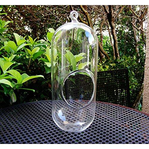 (Hängende Pflanze Terrarium Glas 11 Zoll Große Bullet Terrarium DIY Sukkulenten Gartenarbeit)