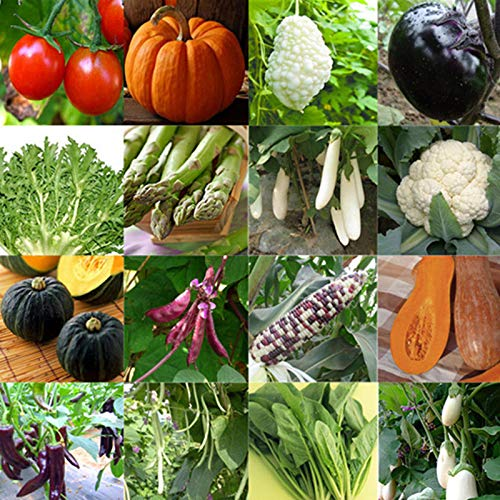 Portal Cool Blanc Radis 50 graines: Jardin potager gros Heirloom semences non Ogm Banque Plant Survival organique