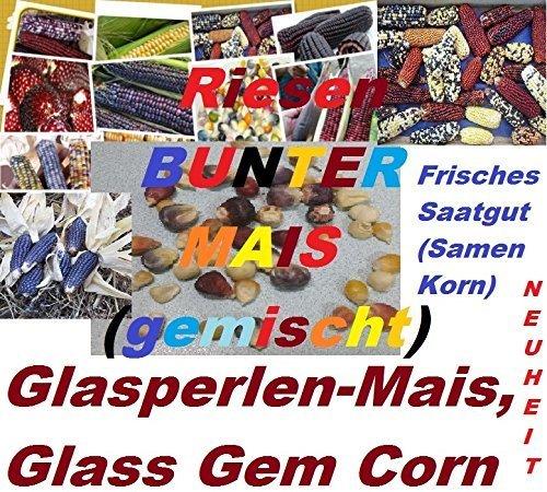 40x Riesen Bunter Mais Glass Gem Corn Original Regenbogen Mais essbar lecker und guter Geschmack Getreide Körner Korn Samen #274 (Pro Top-korn)