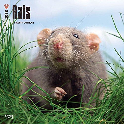 Rats - Ratten 2018 - 18-Monatskalender: Original BrownTrout-Kalender [Mehrsprachig] [Kalender] (Wall-Kalender) -