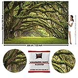 GREAT ART Papier Peint Photo de Décoration Forêt de Chêne 336x238cm / 132.3x93.7 pouces - Papier Peint 8 Unités plus Colle incluse: Poster Mural avenue d'arbres.
