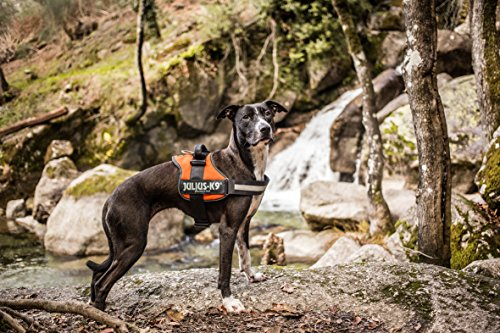 Julius-K9, 162M-BB1, Powerharness 8