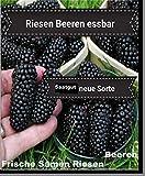 25x Riesen Beeren Samen Saatgut Garten Pflanze Rarität Obst essbar lecker Brombeere Neuheit #125