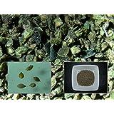 Ortie Dioïque - 0,30 grammes - Urtica Dioica - Stinging Nettle - (Engrais vert - Green manure)