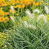 Le erbe annuali ornamentali mescolano i semi - 400 semi - 400 semi