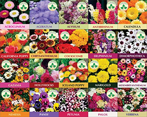 Only For Organic Twenty Winter Flower Seeds(4800+ Seeds) With Cocopeat Block And Instruction Manual 61Xym4xgGBL