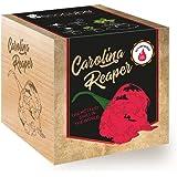 Feel Green Ecocube Chili Carolina Reaper, scherptegraad: 10+, Scoville: 2,2 miljoen, duurzaam cadeau-idee (100% eco Friendly)