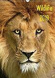 Wildlife 2019 (Wandkalender 2019 DIN A3 hoch): Wildlife-Fotografie (Monatskalender, 14 Seiten ) (CALVENDO Tiere)