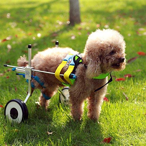 Ajustable para silla de ruedas para extra pequeño perro (XXS), cadera altura:...
