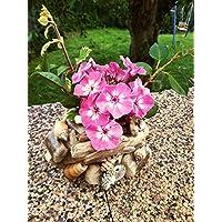 Blumen Körbchen aus Treibholz und Muscheln...Handarbeit
