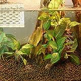 UxradG 3Arten Kunststoff Pflanzen Gras, Aquarium Künstliche Fische Tank Dekoration Aquarium Decor Grün Gras Unterwasser Kunstpflanze, style