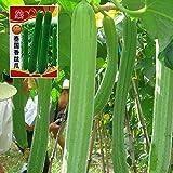 CWAIXX Farmer es vier Jahreszeiten Gartenterrasse im Frühjahr Gemüse Samen säen Gemüsesamen eingemachte Früchte Erdbeere Lauch und Koriander, Luffa cylindrica