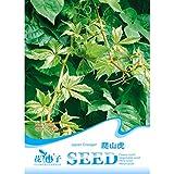 Calli Semillas enredadera de vid semillas parthenocissus quinquefolia 40pcs Virginia