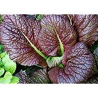 Premier Seeds Direct ORG201 - Verdura (orgánico)