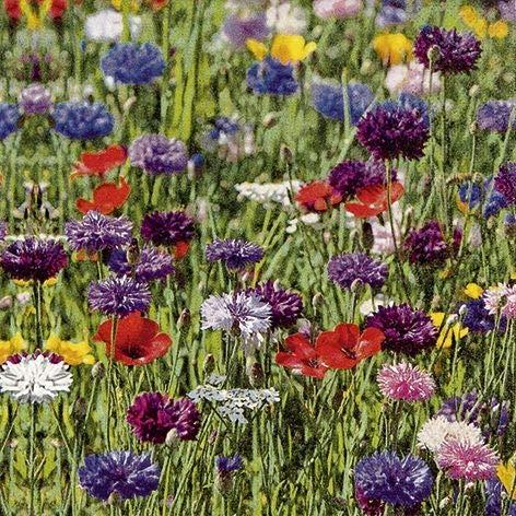 60 Servietten Blumenwiese Flower Field 33 x 33 cm 3 lagig, Lunch Servietten Napkins Tissues, für den gedeckten Tisch, Party, Fest, Thema, Veranstaltung