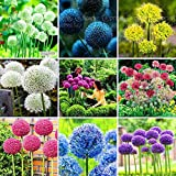 100 Purple Giant Allium Giganteum Beautiful Flower Seeds Garden Plant the budding rate 95% rare flower for kid
