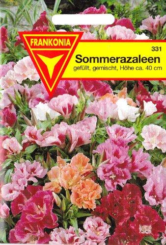 azalee-sommerazalee-godetia-grandiflora-ca-30-samen