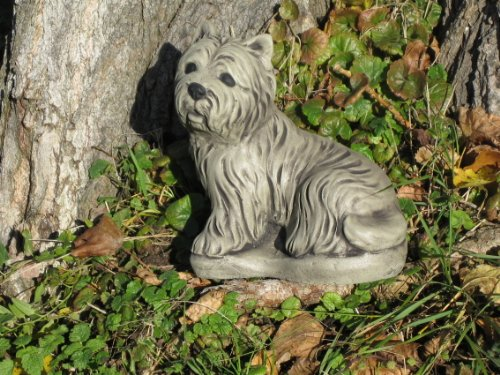 Highland Stein (Westi Hund West highland terrier, Stein,)