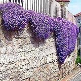 Gfone Seme di fiore -Crescere Semi combinati di fiori selvatici Semi Annuali perenne fiore pianta Semi giardino