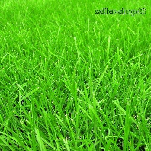 Portal Cool 500pcs / bag, Erba, Evergreen Prato, per il calcio Campi, Golf, semi della pianta di giardino