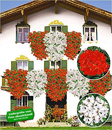 OBI Fördert eine dauerhafte Blütenpracht