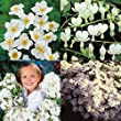 The Pure White Flowering Garden - 4 plants