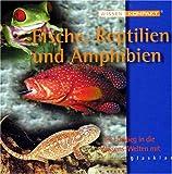 Produkt-Bild: Wissen kompakt: Fische, Reptilien und Amphibien