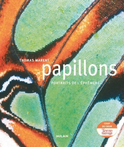 Papillons par Thomas Marent