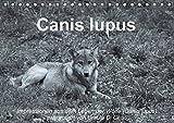 Canis lupus (Tischkalender 2018 DIN A5 quer): Impressionen in schwarz-weiss aus dem Leben der Wölfe (Monatskalender, 14 Seiten ) (CALVENDO Tiere) [Kalender] [Apr 01, 2017] Di Chito, Ursula