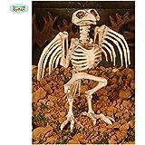 Esqueleto pájaro 20 cms.
