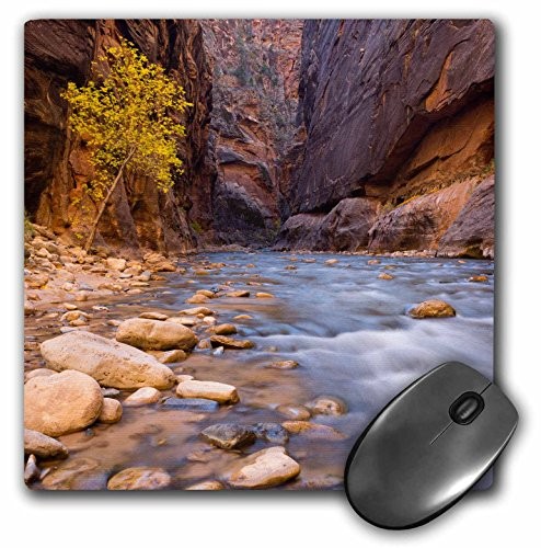 3drose die verengt, der Virgin River - Utah, Zion National Park. - Maus Pad, 8 von 20,3 cm (MP 206920 _ 1)