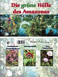 Mini-Gewächshaus - Amazonas - mit Samen vom Florettseidenbaum, Riesengranadilla und Lampionblume