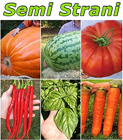 55 SEEDS of the GIANTS: 5 SEEDS of the GIANT PUMPKIN ATLANTIC GIANT + 10 SEEDS of WATERMELON AMERICAN GIANT CHARLESTON GRAY + 10 SEEDS of ITALIAN GIANT TOMATO + 10 SEEDS of GIANT BASIL from NAPLES ITALIAN PESTO + 10 SEEDS of RED HOT CHILI PEPPER CAYENNE LONG RED + 10 SEEDS of GIANT CARROT FLAKKEE