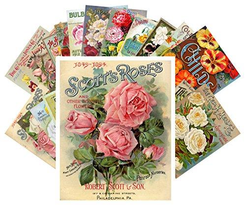Tarjeta postale 24pcs Flowers Vintage Seed Pockets Gardens and Roses
