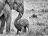 Masai Mara, Kenia 1000 Teile Puzzle quer