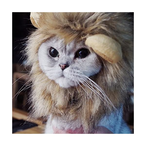 Bello-Luna-Lion-Hair-Headgear-for-Small-Dog-and-CatsLion-Mane-Wig-Puppy-Cosplay-Costume-for-Halloween-Christmas-Easter-Festival-Party-Activity