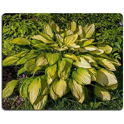 luxlady Alfombrillas de goma natural imagen ID 31334022accesorios con hojas de color amarillo en el